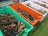Billingsgate Fish Market