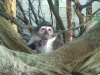 Monkey - London Zoo