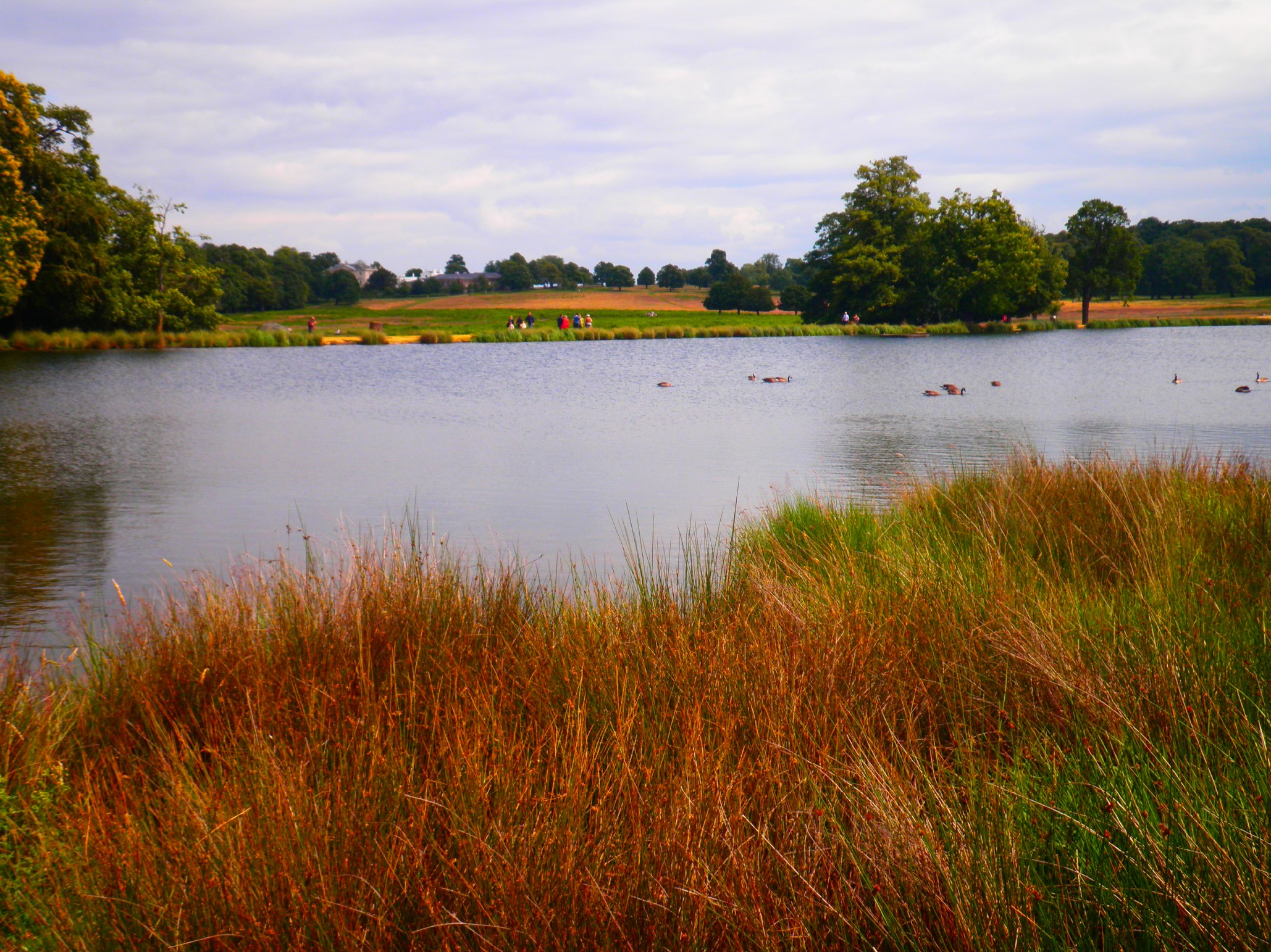 Loch at Richmond Park - London