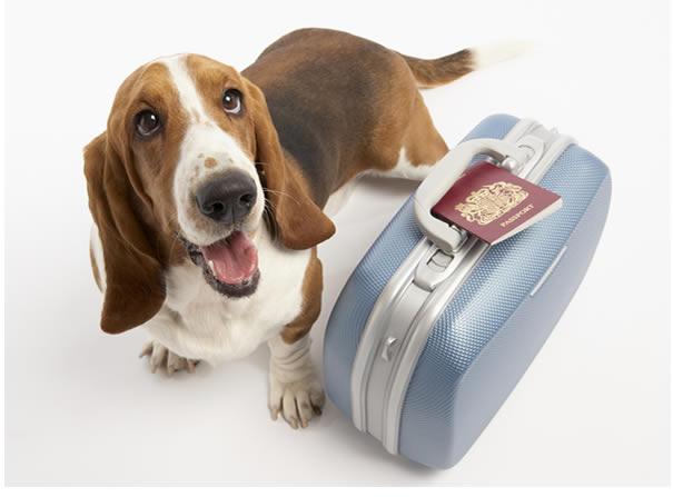 Viajar con mascotas al Reino Unido