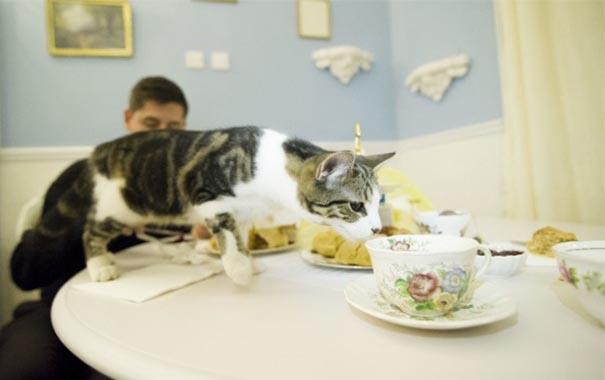 Gato sobre la mesa con té y pastitas
