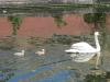 Little Venice & Regent\'s canal
