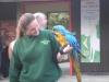 Parrots - London Zoo