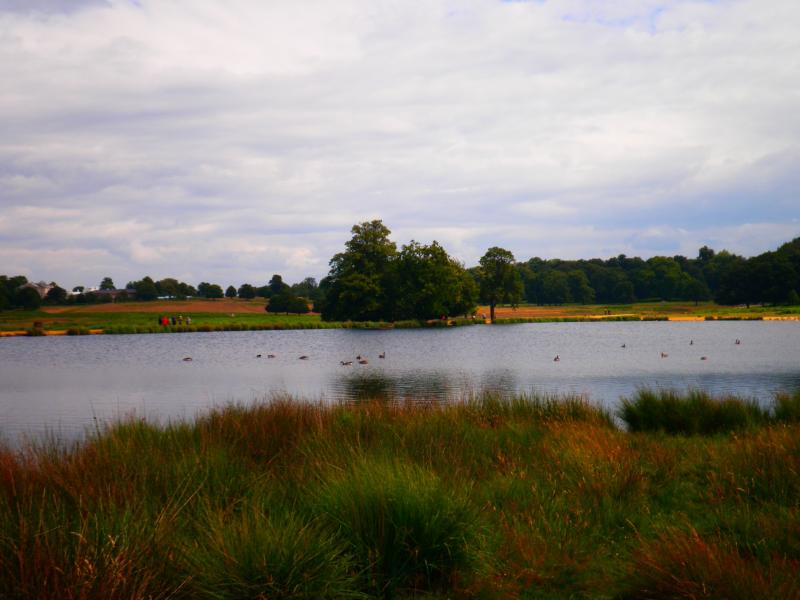 Richmond Park - London