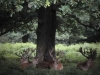 Deers at Richmond Park - London